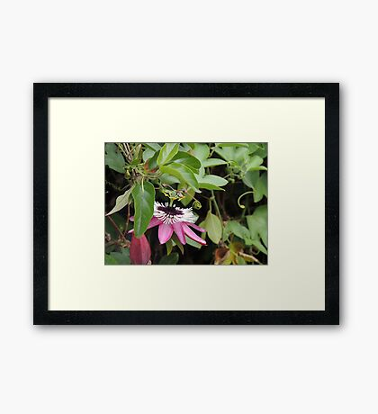 My Favorite Flower Framed Print