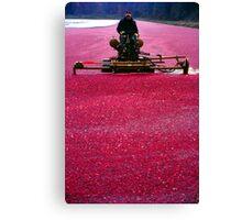 Cranberry Harvest Canvas Print