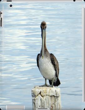 Pelican (iPad Case) by AuntDot