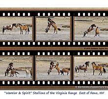 """Warrior"" & ""Spirit"" wild stallions of the Virginia Range, Reno, NV by Ellen  Holcomb"