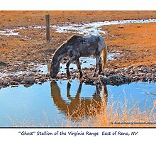 """Reflections of """"Ghost"""" wild Stallion on the Meadow, Reno, NV by Ellen  Holcomb"""