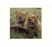 Lions Eating - Kruger National park Art Print