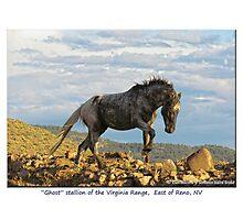 """Ghost"" Wild Stallion on the Ridge, East of Reno, NV Photographic Print"