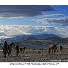 Small band of wild horses, East of Reno, NV by Ellen  Holcomb