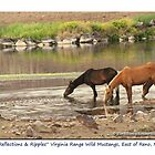 Reflections & Ripples, small band of wild mustangs on the Pond, TRI Nevada by Ellen  Holcomb