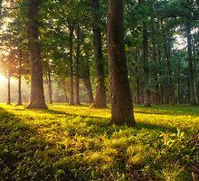 Foggy Woods by Justin DeRosa