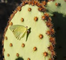 Moth on a Cactus by GlennaFerrell