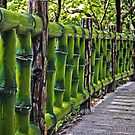 Just Follow The Green Fence by TonyCrehan