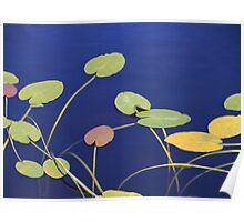Lily Pad Melody Poster