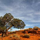 Juniper  tree in Mystery Valley by Robyn Lakeman