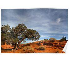 Juniper  tree in Mystery Valley Poster