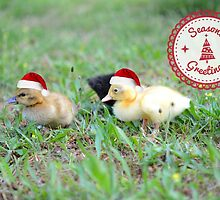 Seasons Greetings from Lucky Duck Grove! by Tracy Jones