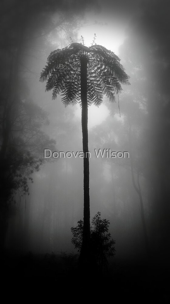 Black and white on the Spur  by Donovan Wilson