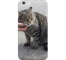 Female hand closeup petting stray cat iPhone Case/Skin