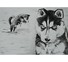 Husky puppies in the snow Photographic Print