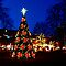 Outdoor Christmas Trees - please read the criteria