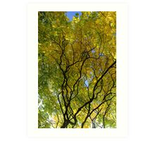 Salcey Forest in Autumn Art Print