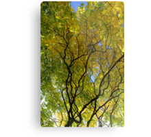 Salcey Forest in Autumn Metal Print