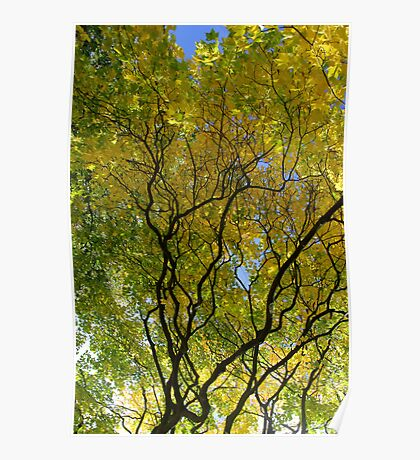 Salcey Forest in Autumn Poster