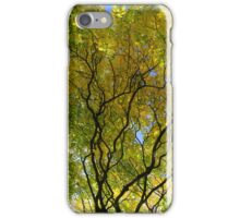 Salcey Forest in Autumn iPhone Case/Skin