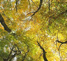 Autumn Glory by KUJO-Photo