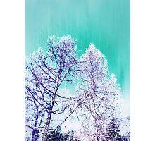 Wish Upon Trees Photographic Print