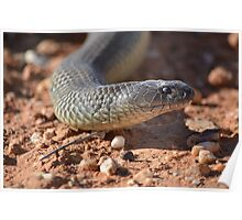 Brown snake sliding his way by.... Poster