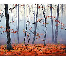 Autumn Woodland Photographic Print