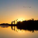 Morning Sun by Maris Stanley