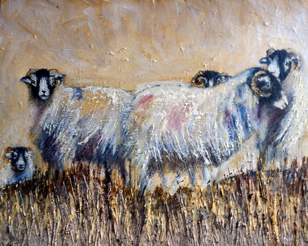 Swaledales on the Hill by Sue Nichol