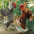 Roosters in Action by Gëzim Geci