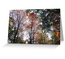 Sunset through fall trees Greeting Card
