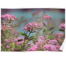 pastel flowers Poster