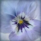 Wild Pansy by Lena Weiss