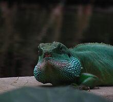 Lizard Iguana Reptile Dragon by TheHolyGoof