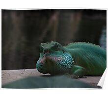 Lizard Iguana Reptile Dragon Poster
