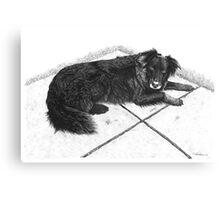 Bess - Boarder Collie Canvas Print