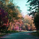 The road through the forest by Angela Bruno