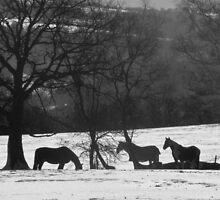 Wild Horses in Snowy Fields by TheHolyGoof