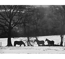 Wild Horses in Snowy Fields Photographic Print
