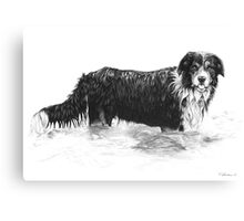 Dog in Water - Boarder Collie Canvas Print