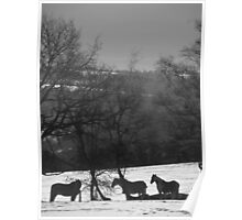 Wintery Equine Poster