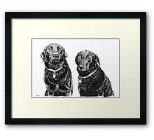 Josh and Toby - Black Labradors Framed Print