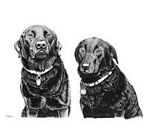 Josh and Toby - Black Labradors Photographic Print