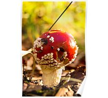 red and poisonous mushroom Poster