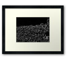 Bees in Black and White Framed Print