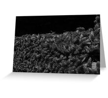 Bees in Black and White Greeting Card