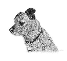 Raggy dog - Terrier Photographic Print