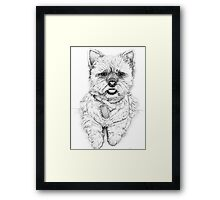 Westie - West Highland Terrier Framed Print