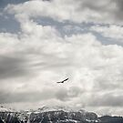 Bird flying above snowy mountains  by hpostant